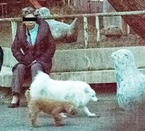 蓮舫の実母が犬を放し飼いし大ひんしゅく