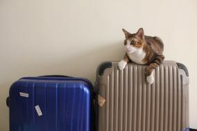 帰国時の税関で荷物チェックを受ける特徴