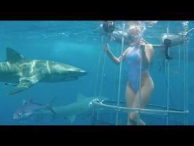 撮影中、サメがAV女優モリー・キャバリを攻撃
