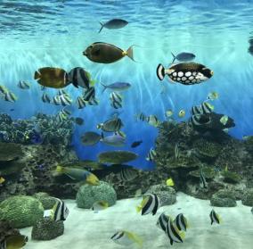 【注意喚起】DMMかりゆし水族館に無料で入場する手口