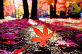 秋だけせどりを行なう私が教える季節せどらーのポイント