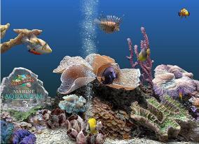 アクアリウムスクリーンセーバー「SereneScreen Marine Aquarium」にライセンス認証の弱点が発見される